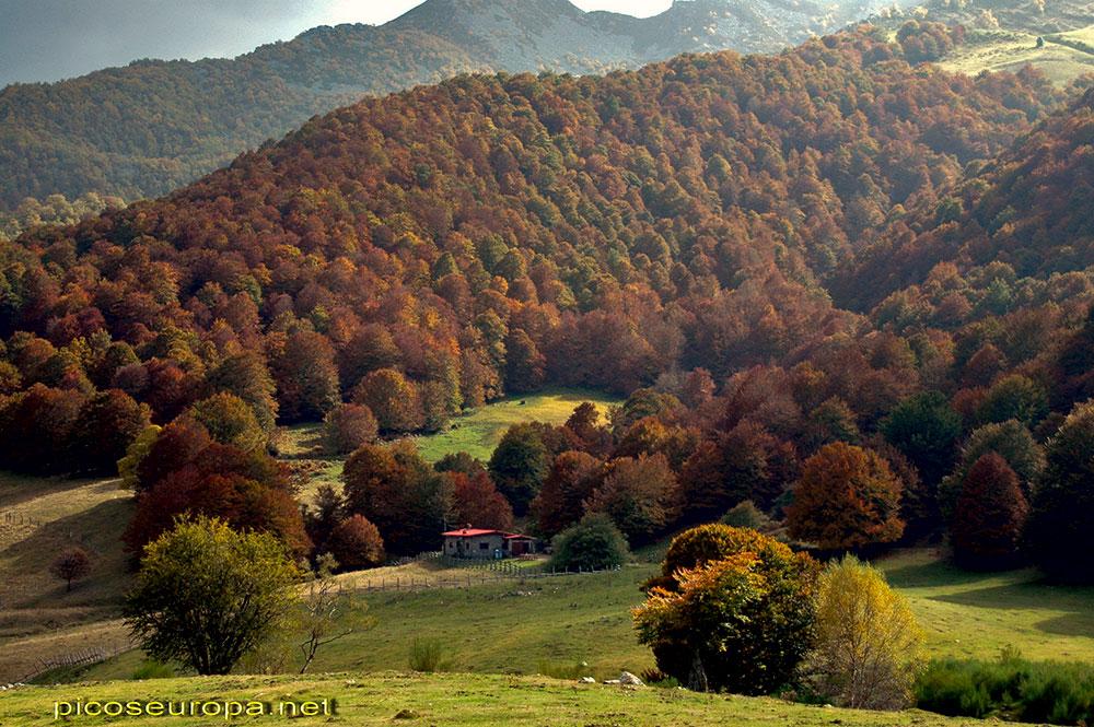 Refugio de Vegabaño situado entre la inmensa pradera de Vegavaño y los magnificos bosques que la rodean, Sajambre, Picos de Europa, León