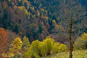 Artiga de Lin, Valle de Aran, Pirineos, Lleida, Catalunya, España