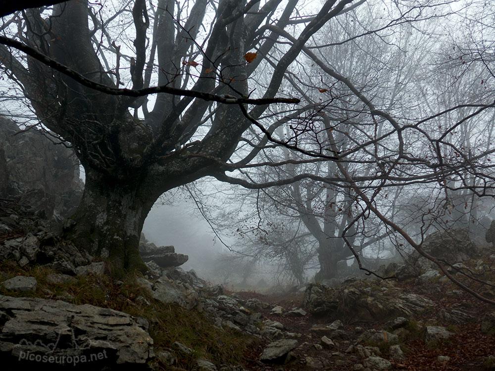 Fotos, ruta y track: Bosque de Leungane, Parque Natural de Urkiola, Duranguesado, Bizkaia, Pais Vasco