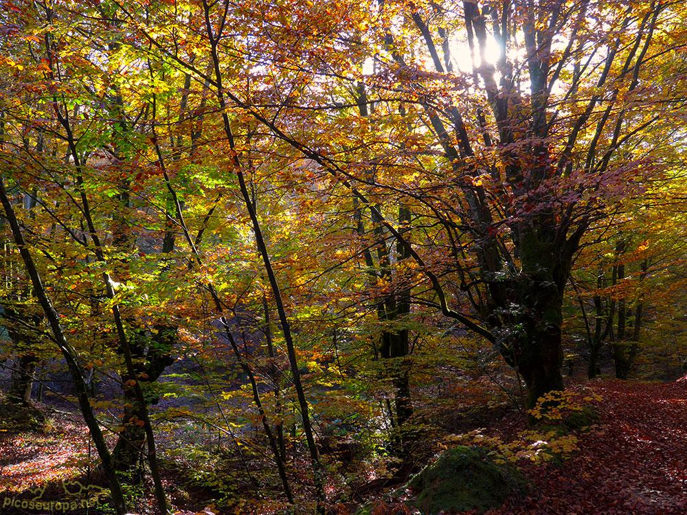 Fotos y ruta por un bosque de ensueño en el Pais Vasco, bosques del embalse de Urrunaga junto a Vitoria