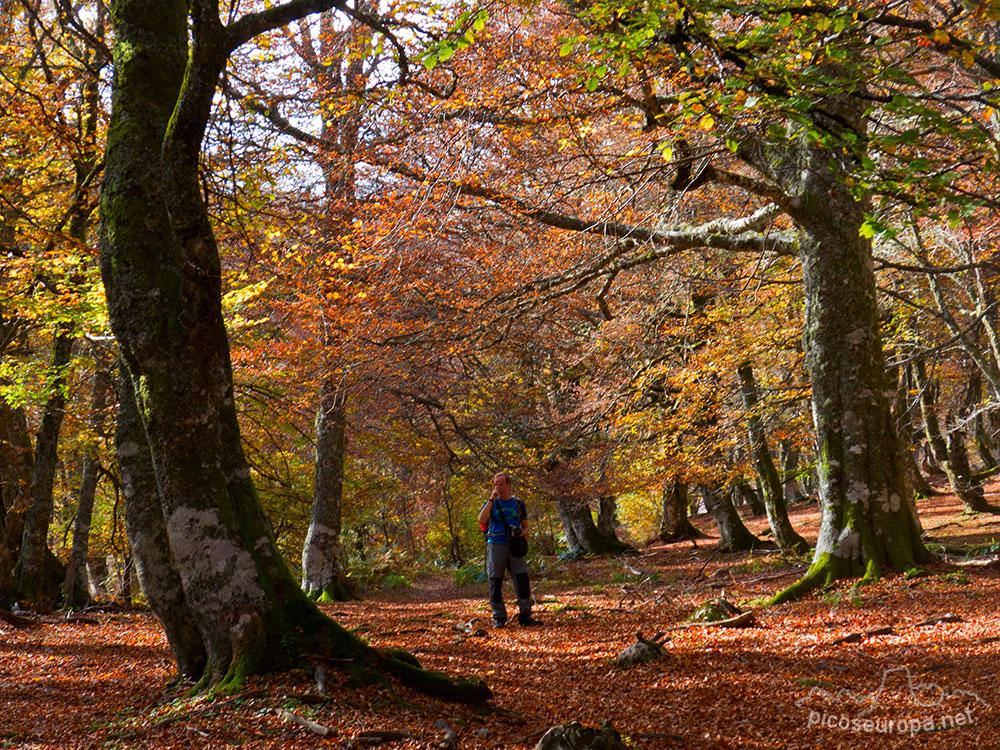 Otoño en Parque Natural de Redes, de Tarna a la Vega de Pociello, Asturias