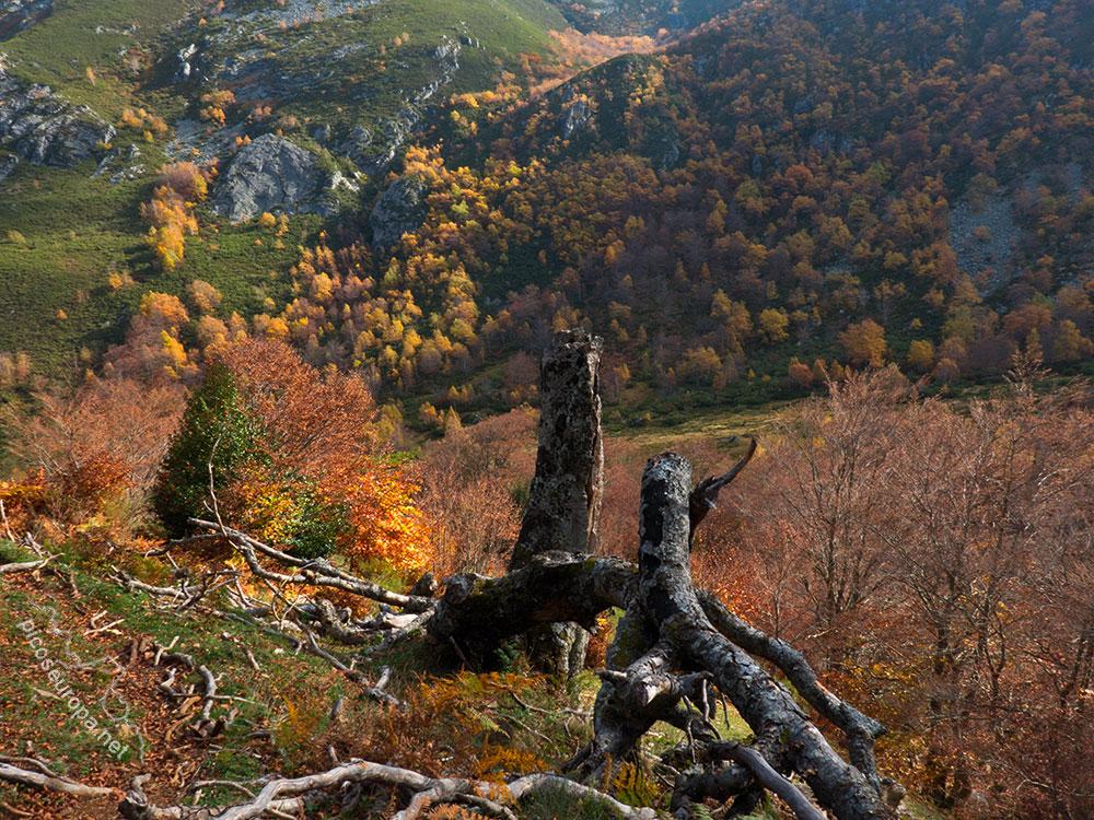 Fotos y rutas: Otoño en Parque Natural de Redes, de Tarna a la Vega de Pociello, Asturias